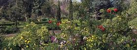 Quinta do Palheiro Ferreiro